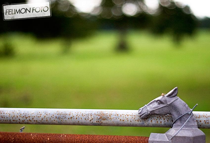 fencehorsefelimonfoto