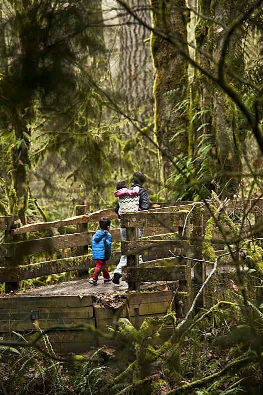 Kennedy Creek Salmon Trail